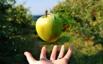 Lực hấp dẫn của Trái Đất khiến quả táo rơi xuống mặt đất tay vì bay lên như thế này