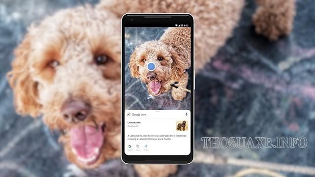 Ứng dụng Google Lens cung cấp nhiều tính năng hữu ích