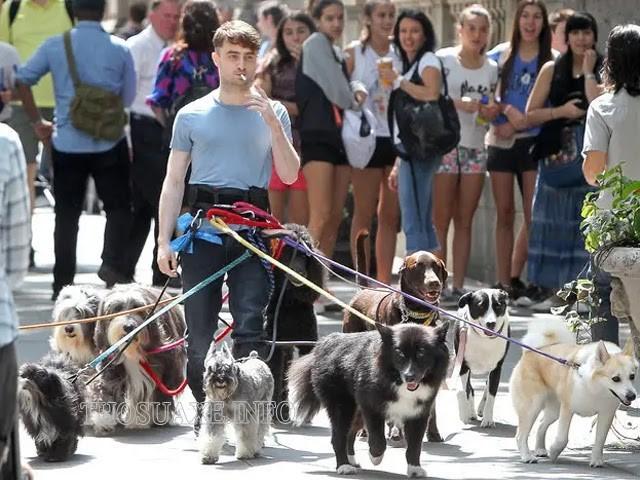 Harry Potter thay vì học phép thuật ở Hogwart nay lại theo đuổi giấc mơ dắt chó đi dạo